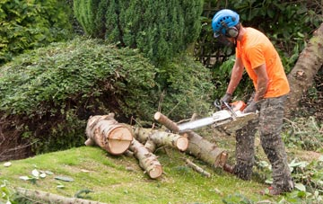 additional services offered by Richmond Hill tree surgeons