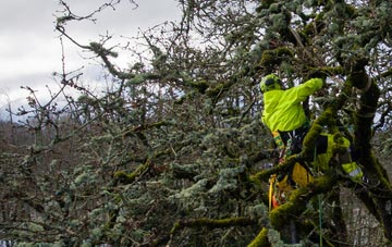 experienced Richmond Hill arborists are needed