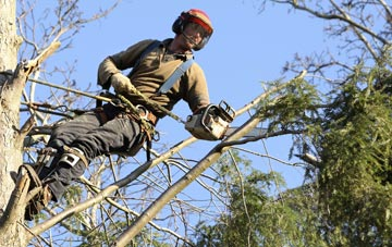 hiring experienced Richmond Hill tree surgeons