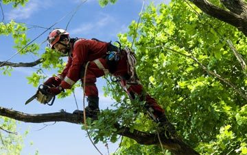 find trusted rated Richmond Hill tree surgeons in West Yorkshire
