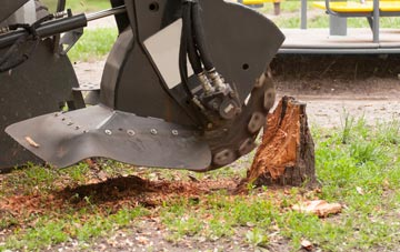 professional Richmond Hill stump grinding services