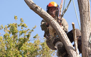 finding qualified Richmond Hill tree surgeons