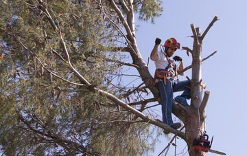 reasons to consider Richmond Hill tree surgery