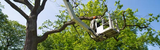 Richmond Hill tree surgery services