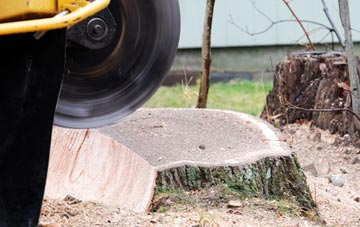tree stump grinding Richmond Hill, West Yorkshire