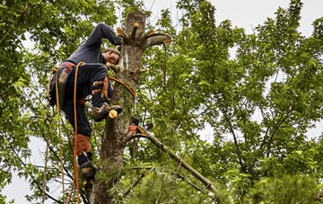 tree surgeon Richmond Hill, West Yorkshire