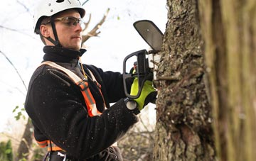 Richmond Hill tree surgery costs