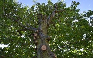 what is Richmond Hill tree surgery?