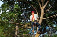 Richmond Hill tree crown reduction services