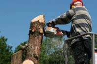 Richmond Hill felling services