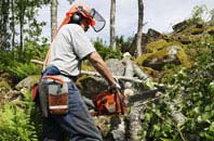 Richmond Hill tree removal services