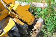 Richmond Hill tree stump grinding services