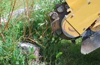 free Richmond Hill tree stump grinding quotes
