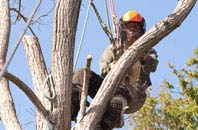 Richmond Hill tree surgeon services