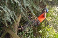 free Richmond Hill tree surgery quotes
